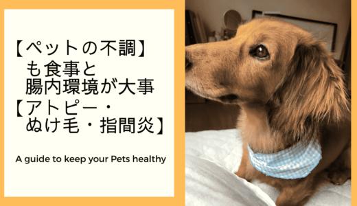 【ペットの不調も】食事と腸内環境が大事【アトピー・ぬけ毛・指間炎】
